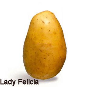 Lady Felicia