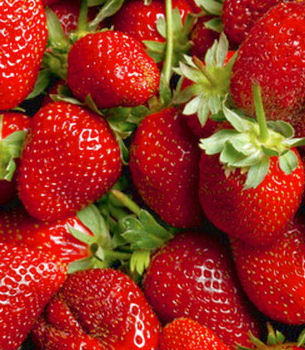 ripe red strawberries with stems and leaves