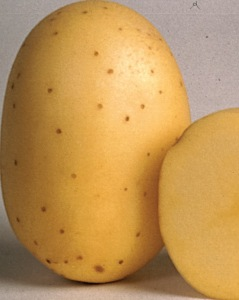 Belana Kartoffel